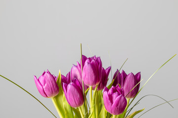 Acrylic Prints Tulip Pink tulips flower bouquet isolated on a solid grey background