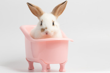 Little white rabbit sitting on pink bathtub with isolated white background at studio. It's small mammals in the family Leporidae of the order Lagomorpha. Animal studio portrait. Wall mural