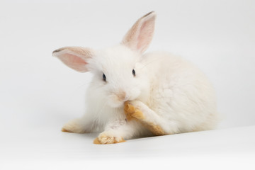 Little shy rabbit sitting on isolated white background at studio. It's small mammals in the family Leporidae of the order Lagomorpha. Animal studio portrait. Wall mural
