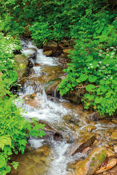 wild stream winds its path through forest shade. beautiful summer nature scenery in the remote woods. rocky bottom of the creek is visible through clear water