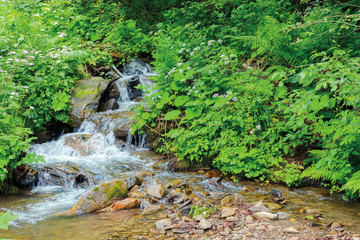 wild stream with cascades in the forest shade. beautiful summer nature scenery. bottom of the creek is visible through clear water
