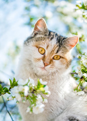 Funny red cat on the background of a blooming spring garden