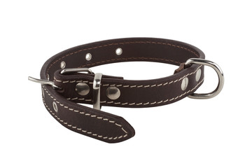 Brown leather dog collar Fotobehang