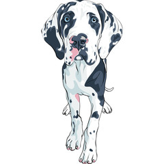 vector spotted dog Great Dane breed