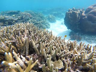 Keuken foto achterwand Koraalriffen Bleaching Coral Reef of the Perhentian Islands, Malaysia, 2018.