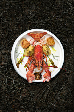 Beautiful plate of a lobster and scallops on a bed of seaweed