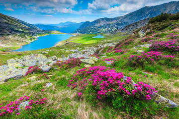Wall Mural - Colorful pink rhododendron flowers and Bucura lake, Retezat mountains, Romania