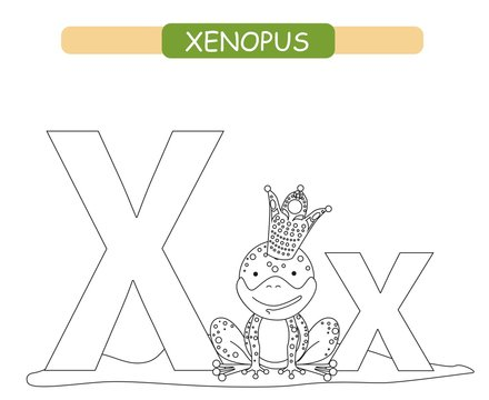 Letter X and funny cartoon xenopus. Coloring page. Animals alphabet a-z. Cute zoo alphabet in vector for kids learning English vocabulary. Printable sheet.