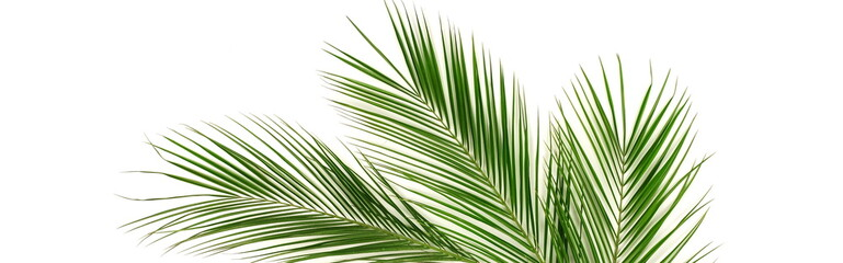 Banner tropical green palm leaves , branches pattern frame on a white background. top view.copy space.abstract. Wall mural