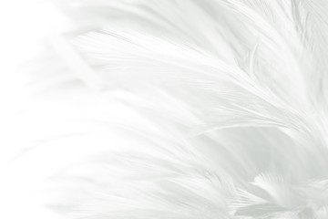 Beautiful white feather pattern texture background