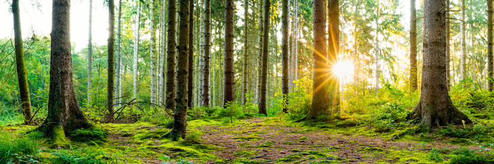 Wonderful forest panorama in spring with bright sun shining through the trees Wall mural