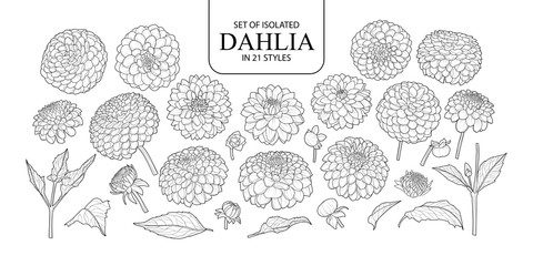 Set of isolated Dahlia in 21 styles.