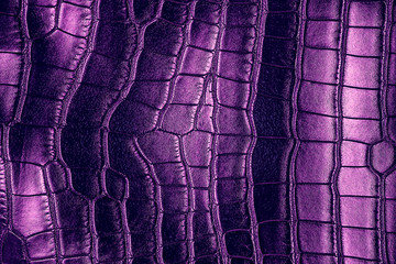 Wall Mural - Dark background - violet crocodile leather texture.
