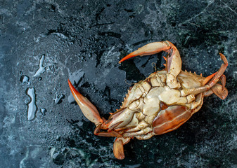 isolated steamed whole blue crab upside down on wet marble background flat lay