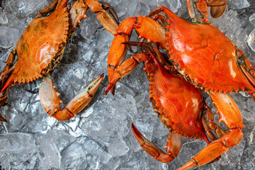 group of steamed whole blue crabs on ice flat lay