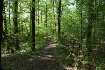 Natchez Trace Trail through forest in Mississippi