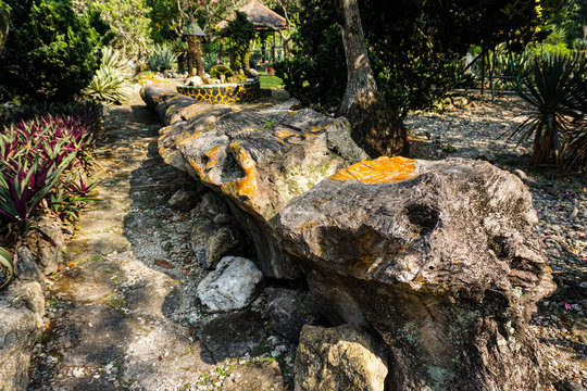 wood fossils on the center of park or garden in bogor indonesia become rock or stone - photo
