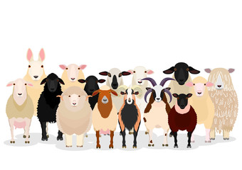 various sheep group