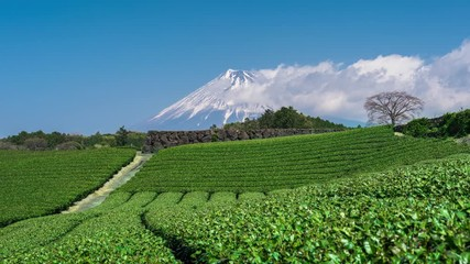 Wall Mural - Time lapse of Green tea fields and Fuji mountains in Japan.