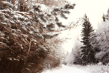 abstract background landscape winter forest / frost-covered tree branches, snowy weather christmas background