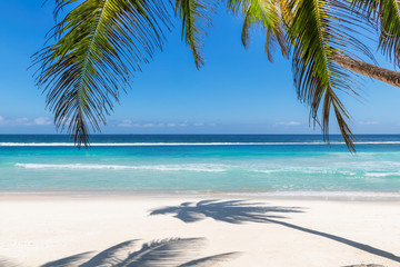 Wall Murals Beach Paradise beach with white sand and coco palms. Summer vacation and tropical beach concept.
