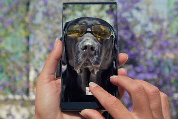 Woman photographing on cell phone dog labrador with sunglasses.