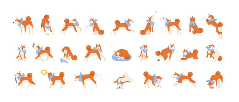 Collection of Akita Inu performing daily activities. Set of cute Japanese dog sleeping, playing, barking, howling, eating. Everyday life of domestic animal or pet. Flat cartoon vector illustration.