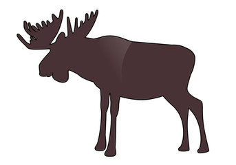 Moose or Elk with big horns isolated on white background