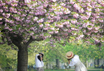 Two women pose as they take pictures amongst cherry blossom in Greenwich in London