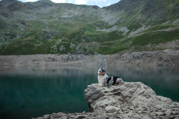Australian Shepherd in nature by the lake. Traveling with a dog in the mountains. Pet Adventure in Italy