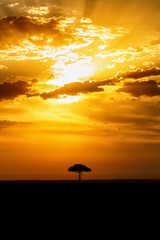 Beautiful sunset with a lone tree on the savannah