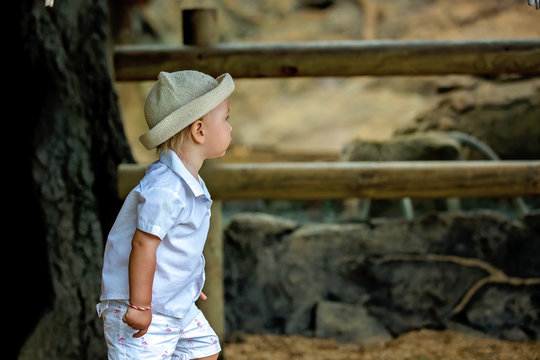 Cute little toddler boy at the zoo, exploring animal world, watching funny monkey