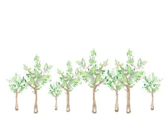 樹木、風景