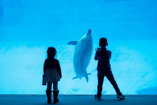 Silhouette children watching dolphin in aquarium