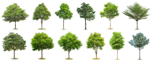 Spoed Fotobehang Bomen The collection of trees isolated on white background. Beautiful and robust trees are growing in the forest, garden or park.