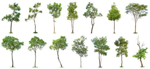 The collection of trees isolated on white background. Beautiful and robust trees are growing in the forest, garden or park.
