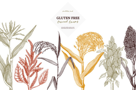 Gluten free plants design template. Hand drawn cereal crops sketches. High detailed vegetarian food illustration. Farm market products on chalkboard. Great for packaging, menu, label.