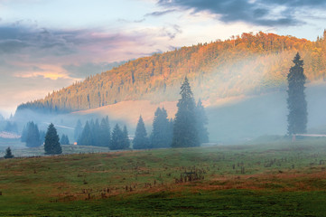 gorgeous sunrise in romanian mountains. foggy countryside autumn scenery. spruce trees on the meadow. flock of sheep in the distance. light touches the top of a forested hill