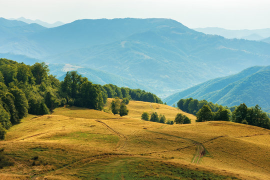 beautiful countryside landscape in late summer. dirt road downhill through meadow. beautiful area on the slope among beech forest. wonderful scenery on august afternoon