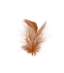 Beautiful brown feather isolated on white background