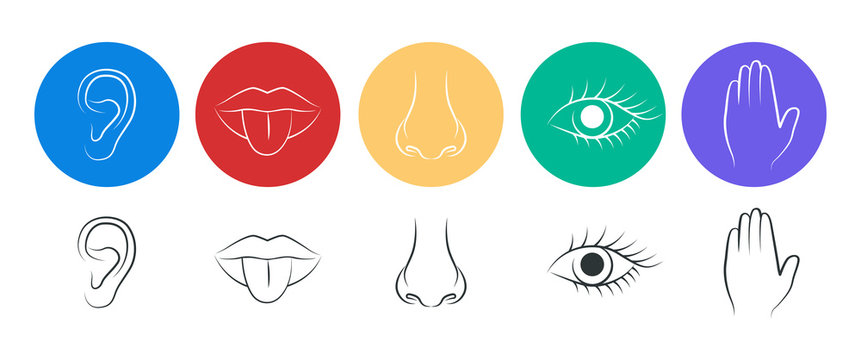 A set of five human senses. Hearing, taste, smell, sight and touch.