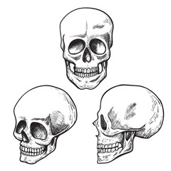 Human skull sketch set, medical and science