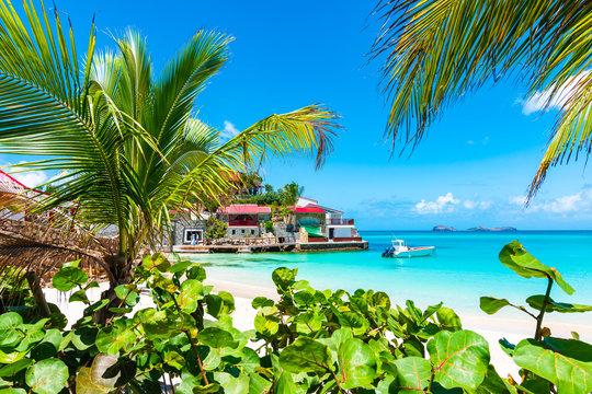 Palm trees on tropical beach, St Barths, Caribbean Island.
