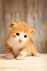 small ginger kitten on background of old wooden boards