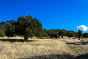 Peaceful Paradise Cemetery is located high in the Chiricahua Mountains of Arizona