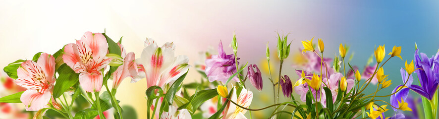 Image of beautiful flowers in the garden closeup