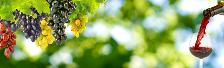 image of grapes and glasses with wine on a green background