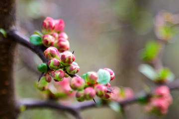 A twig of apple or plum blooming beautifully in spring or summer.
