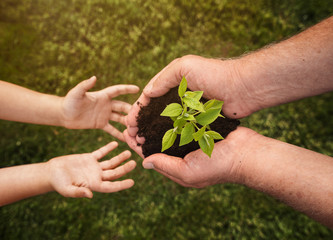 Close up of senior hands giving small plant to a child over defocused green background with copy space