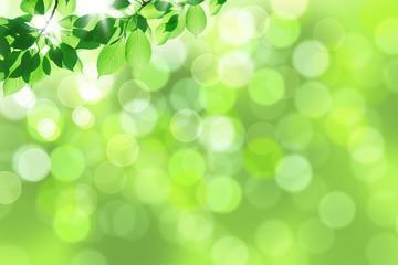 新緑の木漏れ日(クローズアップ)
